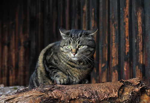 Tuin Afzetten Kat : Gedragsproblemen bij binnenkatten hart voor dieren