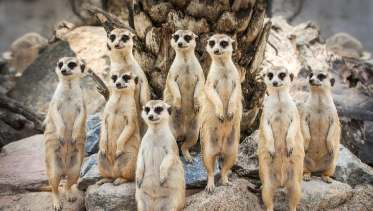 13 leuke dieren familiefoto's!