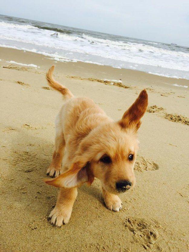 10 Leuke Foto S Van Golden Retrievers Hart Voor Dieren