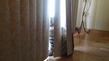 Laten we verstoppertje spelen...