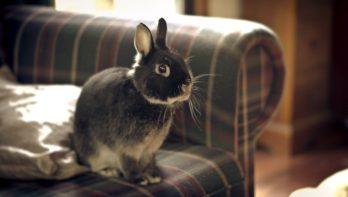 Een konijn zindelijk maken, zo doe je dat!