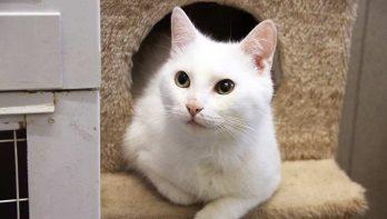 Asiel Knokke-Heist loopt over van de katten