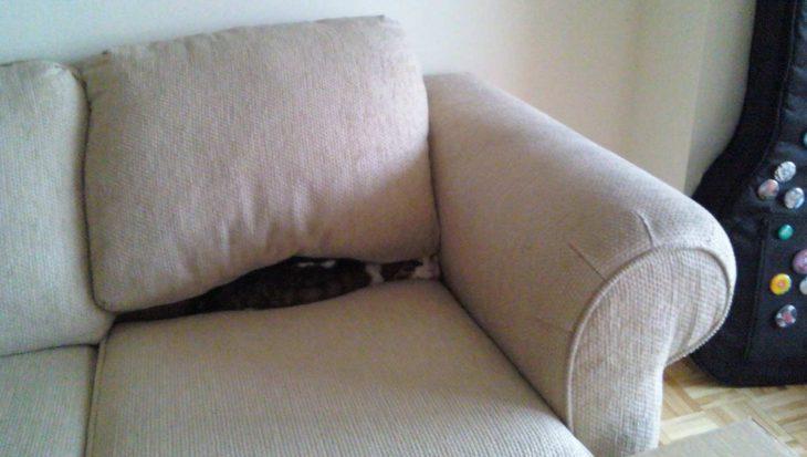 Kat versus stoel