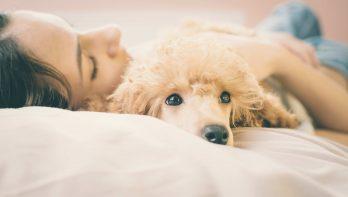 Ziek huisdier = ziek baasje?