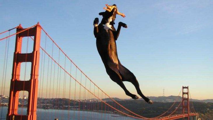 10 perfect getimede hondenfoto's