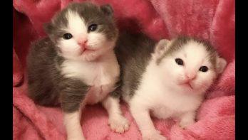Kittens openen hun oogjes en verkennen de wereld