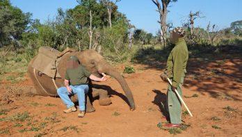 Afrikaanse olifanten 'gebroken' voor toerisme