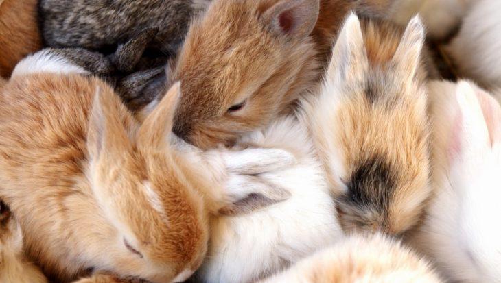 Praxis Tuincentrum verkoopt toch dieren