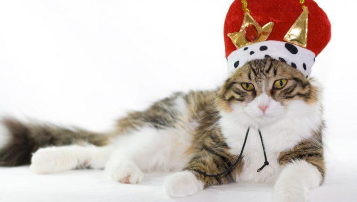 Waarom de katten de koningen van het internet zijn