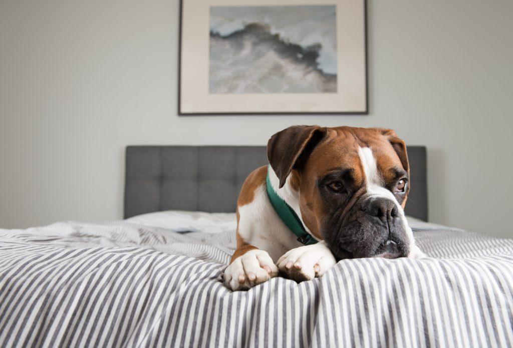 Zo leert een hond alleen te zijn