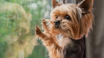 Zo leert je hond om (weer) alleen te zijn