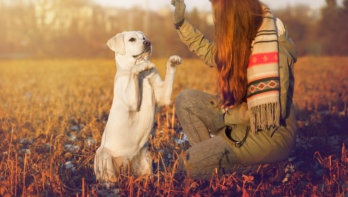 Veel gemaakte fouten bij hondentraining