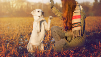 Hondentraining veel gemaakte fouten