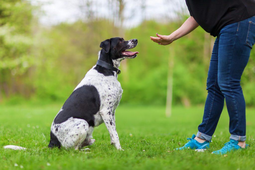 hondentraining: één commando tegelijk