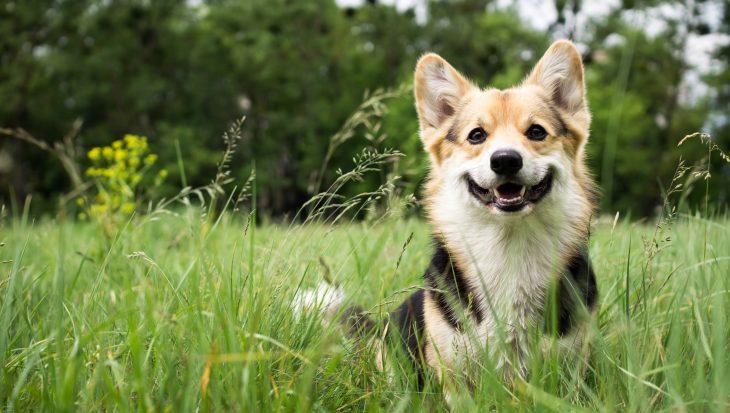 De 7 zonden bij hondentraining