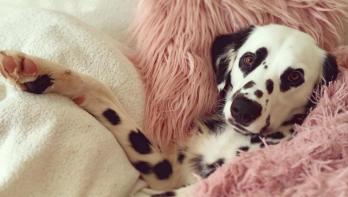 Lief: deze hond heeft hartjesogen