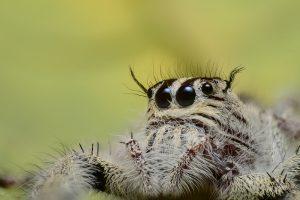 verklaring angst voor spinnen