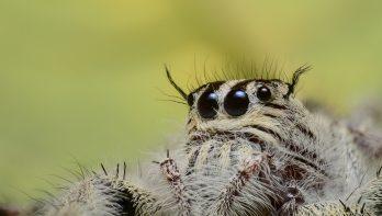 Waar komt de angst voor spinnen vandaan?