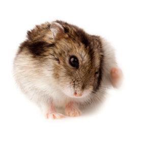 zieke hamster 4