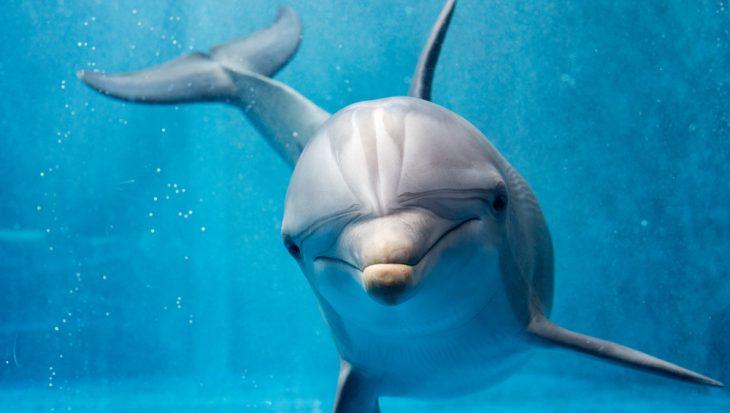 Wilde Dieren Encyclopedie: de Dolfijn