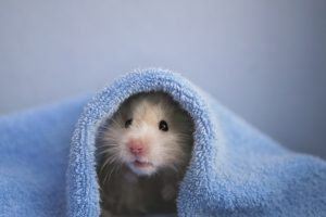 zieke hamster