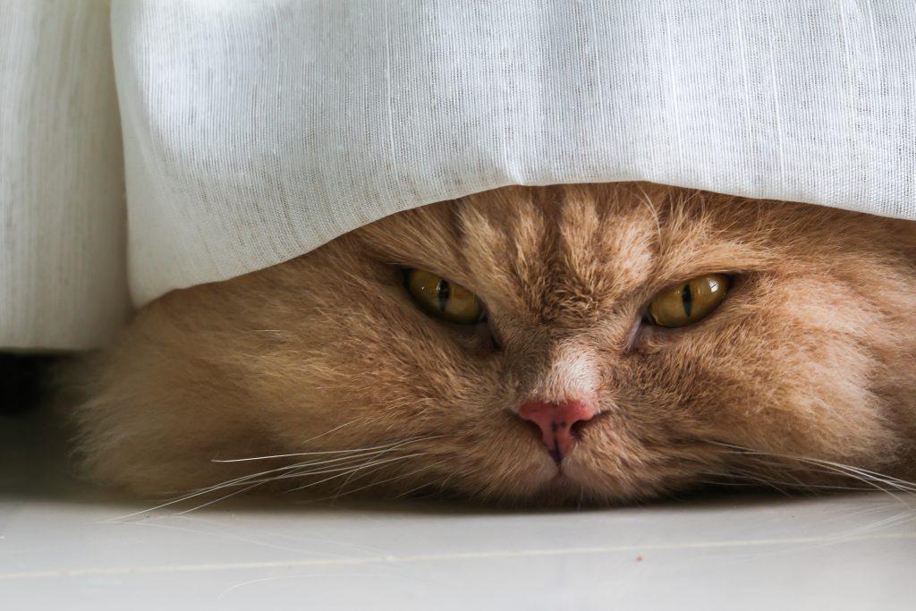 10x (ondeugende) Katten in de gordijnen - Hart voor Dieren