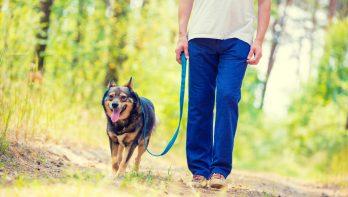 Hondenbezitters, opgelet: het broedseizoen is gestart!