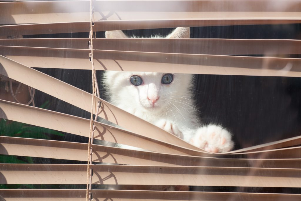 Stunning Kitten Klimt In Gordijnen Contemporary - Moderne huis 2018 ...