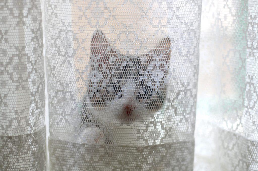 Beautiful Kitten Klimt In Gordijnen Gallery - Trend Ideas 2018 ...