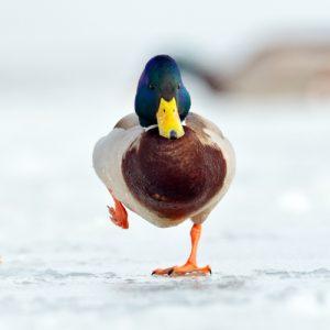 Hoe blijven dieren warm in de winter