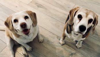 Verhuisdieren van de week: Ruby & Peanut