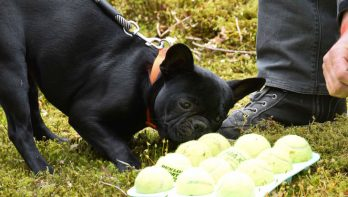 20 & 21 mei: Hondenevenement Bark in the Park in Baarn