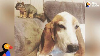 Hond redt eekhoorntje en wordt maatjes met hem
