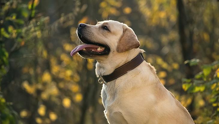 Vier commando's die elke hond moet kennen