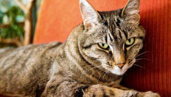 7 tips: seniorenkat in de watten leggen