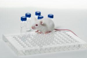 Minder dierproeven gewenst