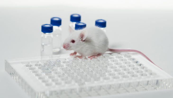 Tweede Kamer wil minder dierproeven in Europa