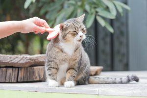 senior kat: vacht