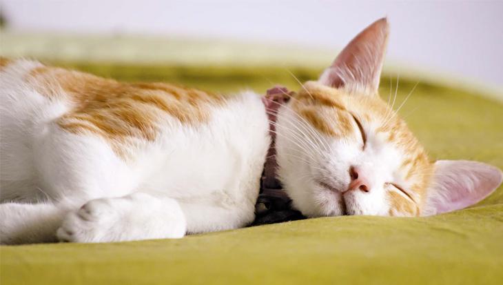 Zo slaapt een kat het liefst