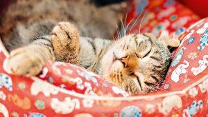 slaapt een kat door lawaai