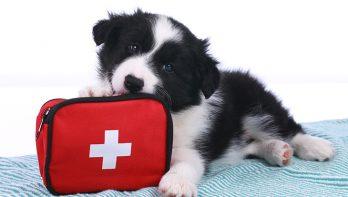 Eerste hulp voor dieren – iedereen kan helpen