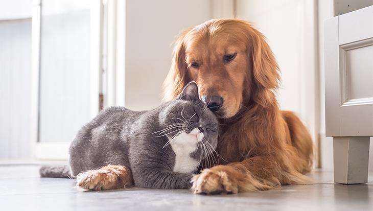Huisdieren in de huurwoning – wat mag?