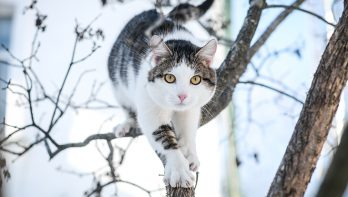 De zeven levens van een kat