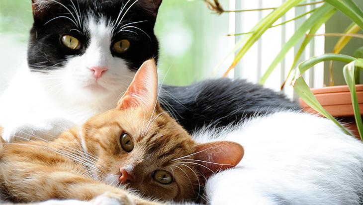 Hebben katten een maatje nodig?