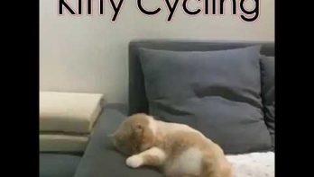 Kitten fietst en botst in zijn droom