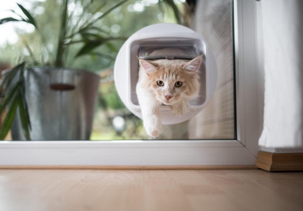 kattenluik infrarood