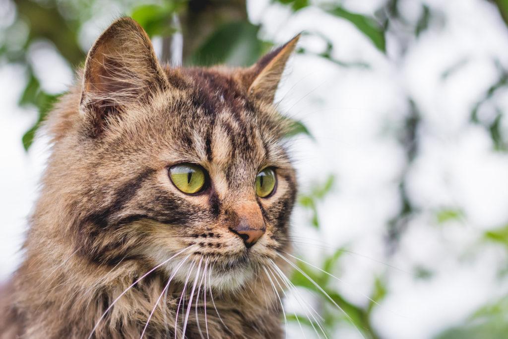 kattenluik grote katten