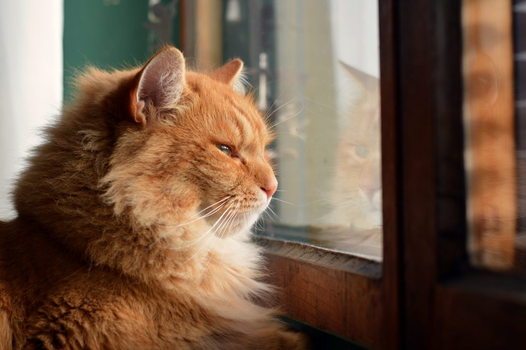 katten een maatje nodig 2