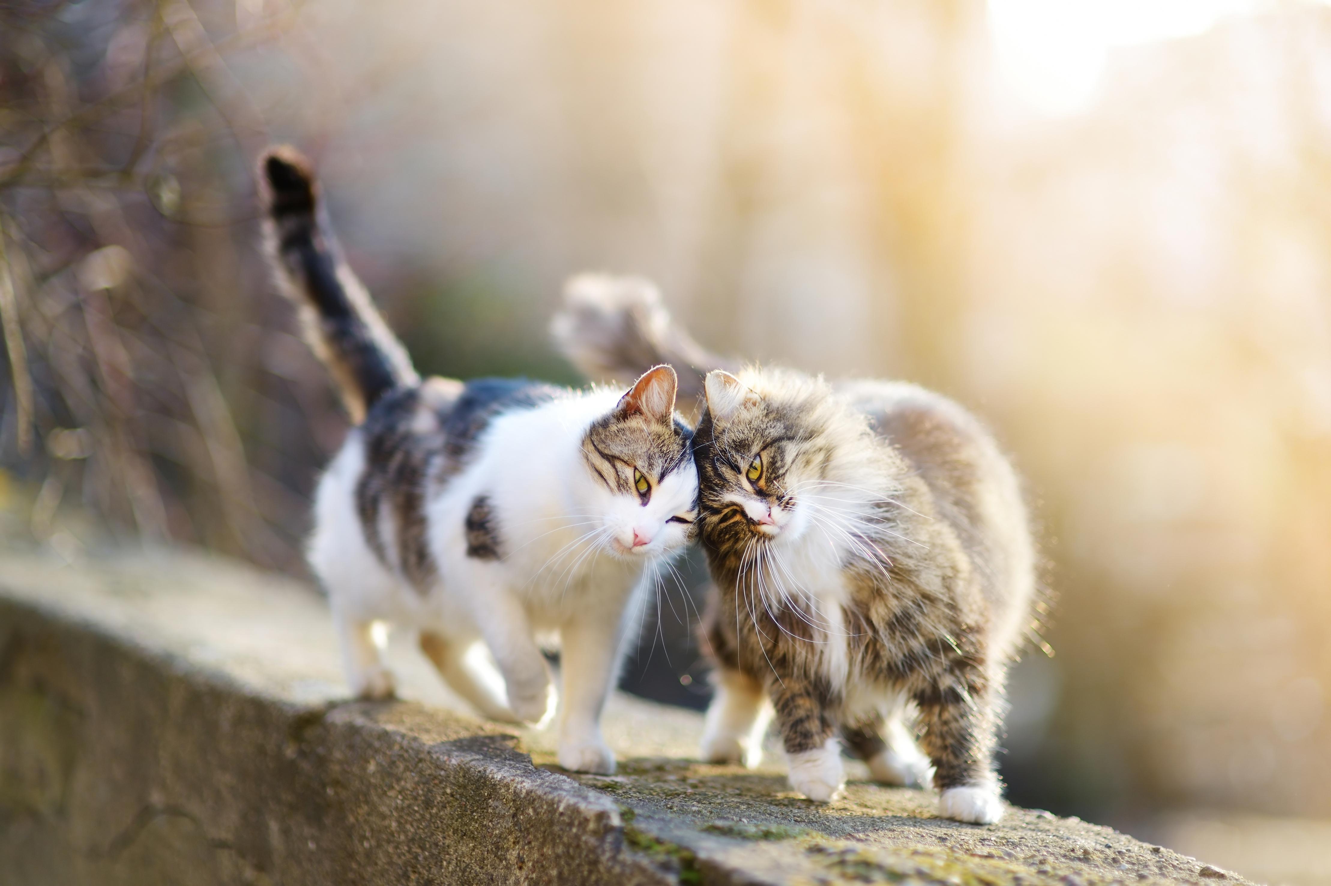 Katten een maatje nodig