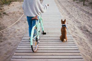 hond naast de fiets